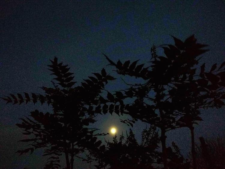 ***HAUNTING MOON*** great moon  - johnhopper | ello