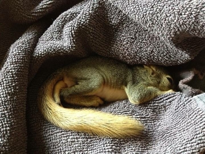 Squirrel - mindy2886 | ello
