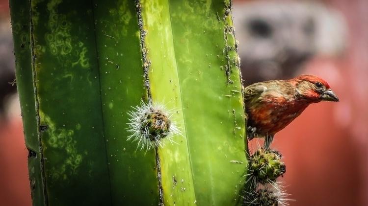 Magician Bird - canon, canonphotography - oreje | ello