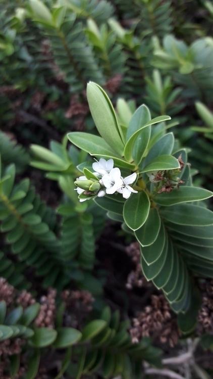garden inspires lifts soul - funkship | ello