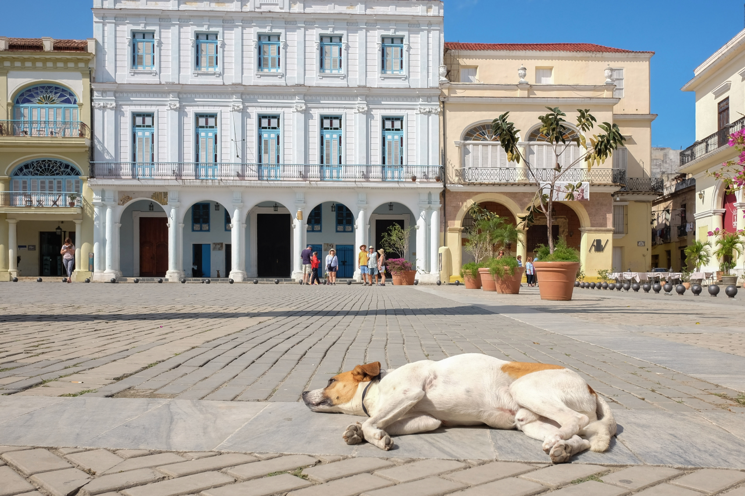 Dog Day Afternoon Havana, Cuba - giseleduprez | ello