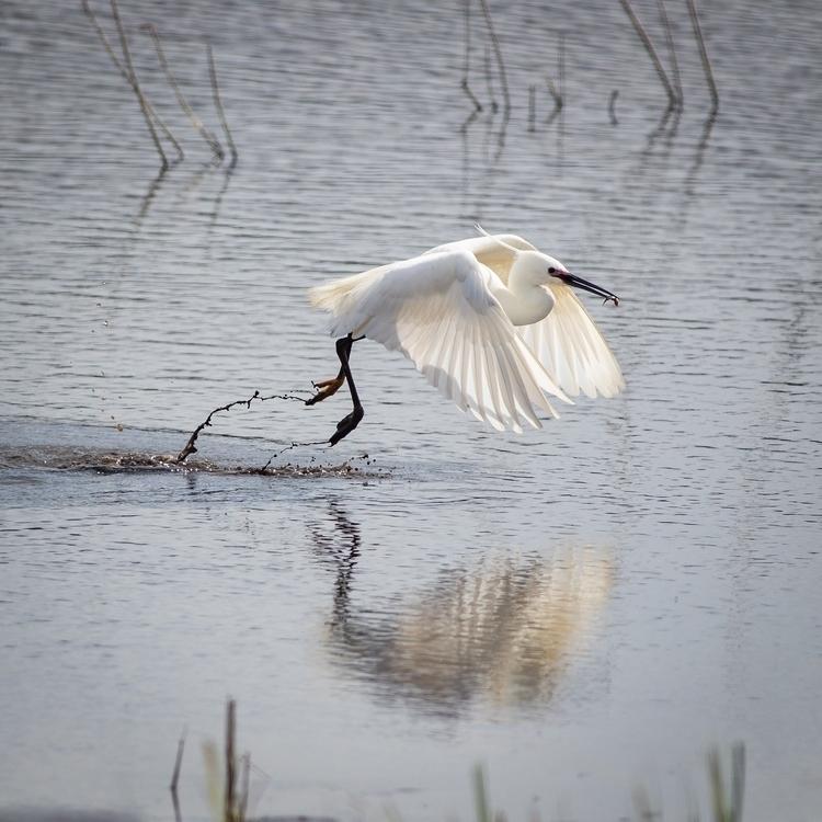 egret picnic lunch - bradverts | ello