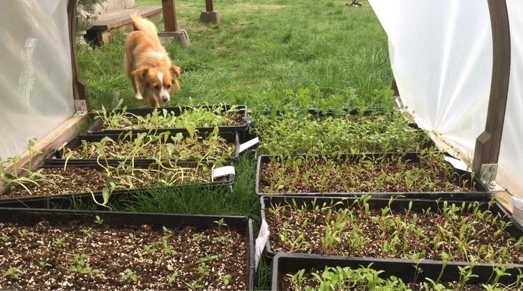 Cali checking stage 3 garden st - laurabalducci | ello
