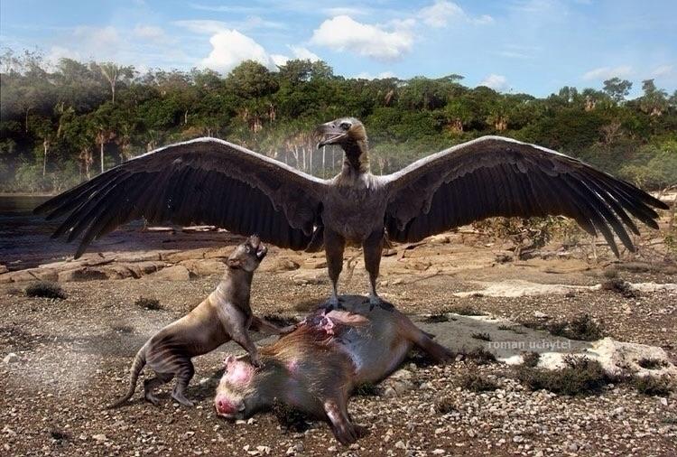 Prehistoric Vulture Called; Liv - devinosaurus | ello