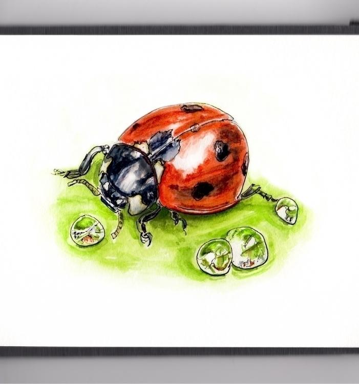Ladybugs Thirsty - watercolor, watercolour - doodlewash | ello