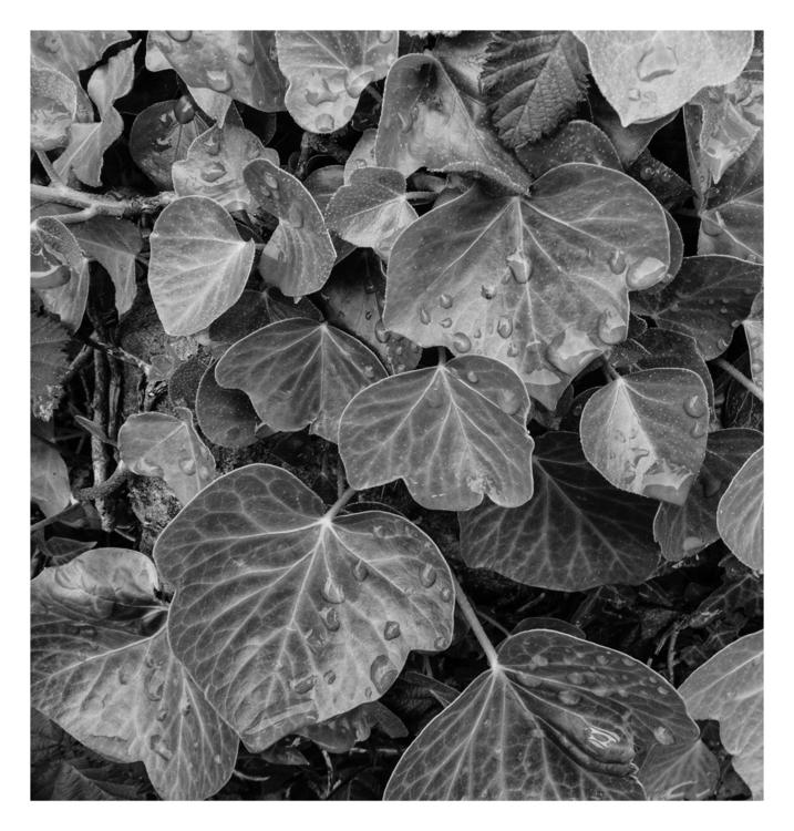 Leaves - guillermoalvarez   ello