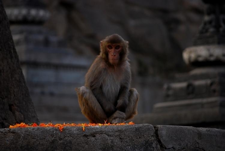 Monkey Temple - Kathmandu, streetphotography - aywai | ello