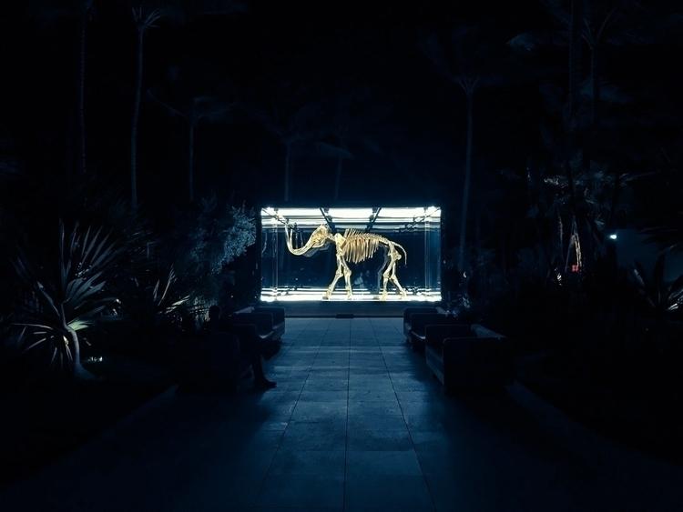 Skeleton glass rectangle - photography - andres10 | ello