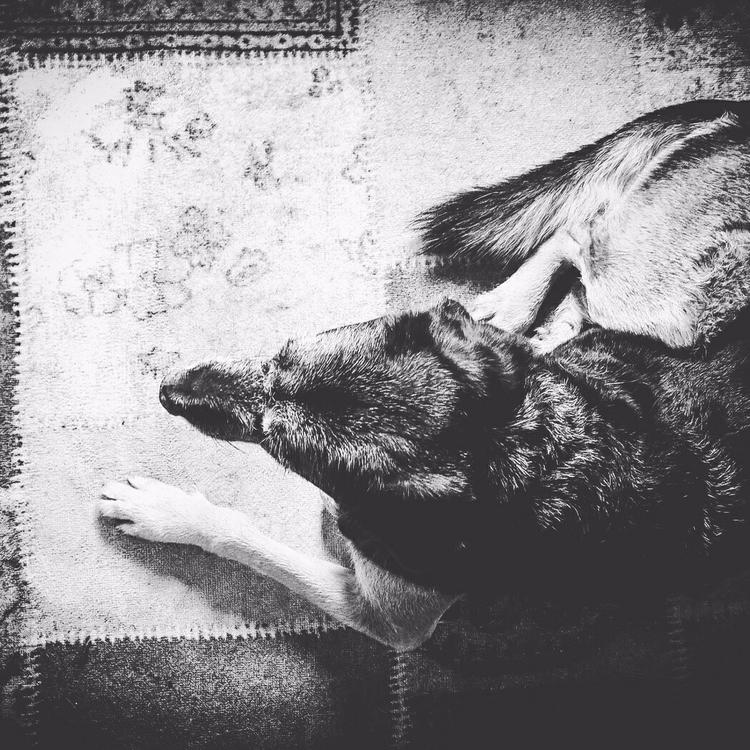 Wolf - ooii | ello