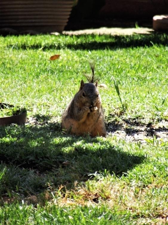 Eating Squirrel shot Celebratio - rafaelc-v | ello