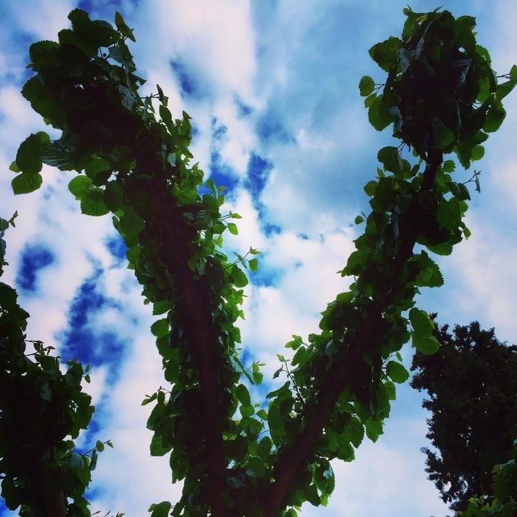 En garde! ashes, rising leaves - georgemlb | ello