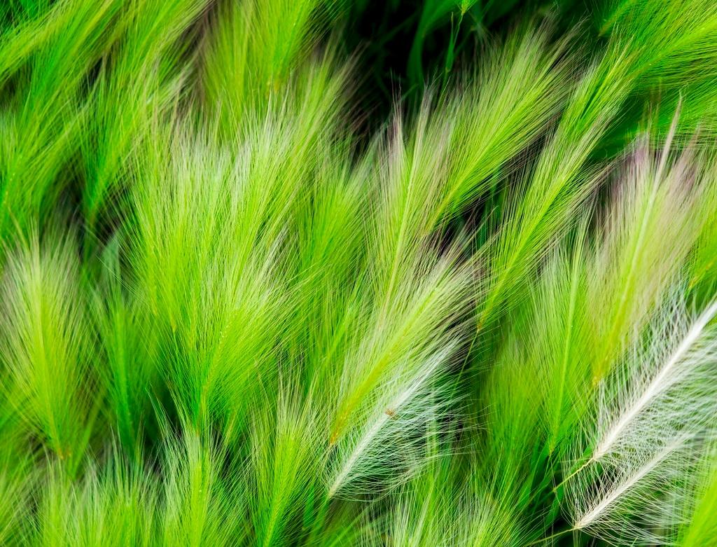 windblown grass Minnesota, USA  - docdenny | ello