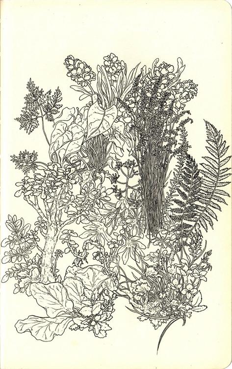 Garden - andisoto, moleskine, illustrator - andimacka   ello