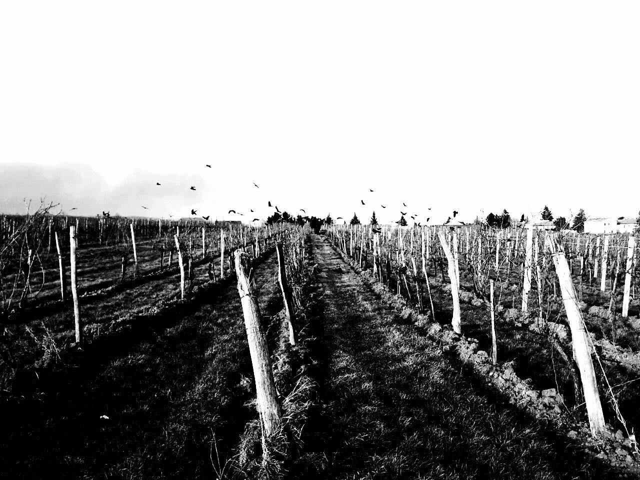 16:45 Vile Vine Visitors - DearDissocialDiary: - eleni_be | ello