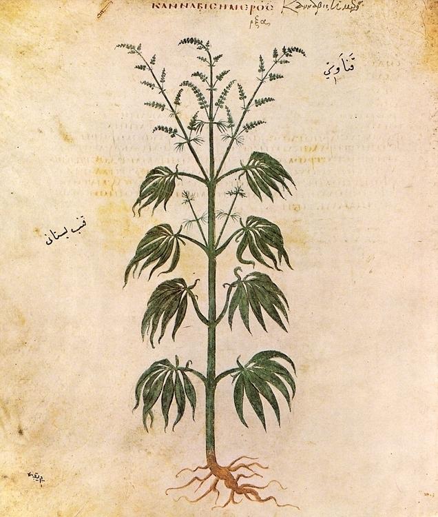 Weed Week - weed, cannabis, hemp - valosalo | ello