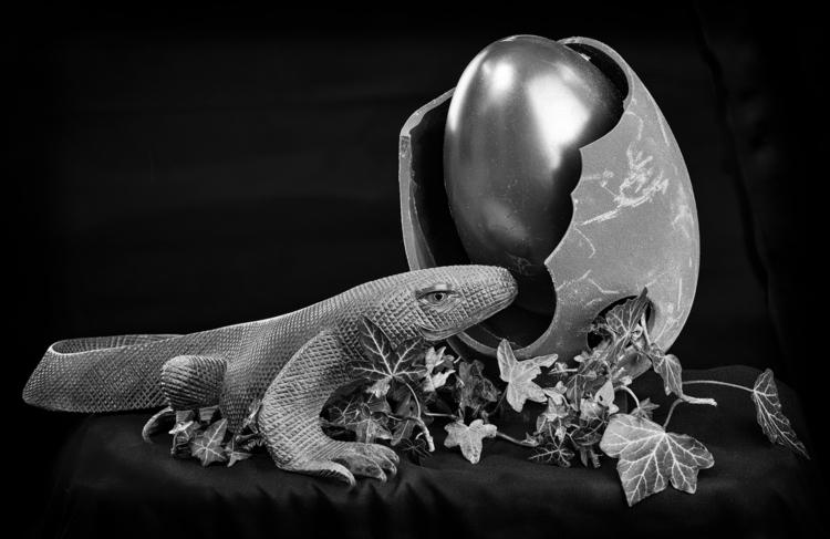 Reptile egg - bradverts | ello