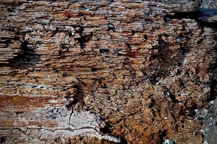 Disintegrating log washed beach - dave63 | ello
