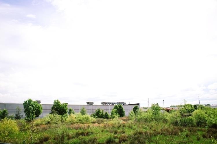 Morning walk - landscape, animals - gpinkney   ello
