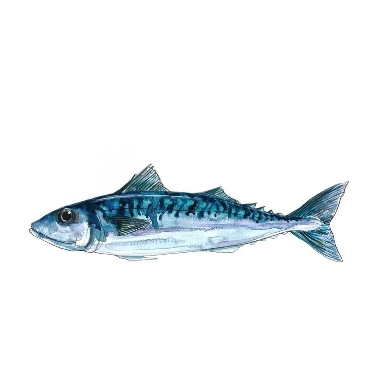 fish, nautical, blue, colour - aliellydesign | ello