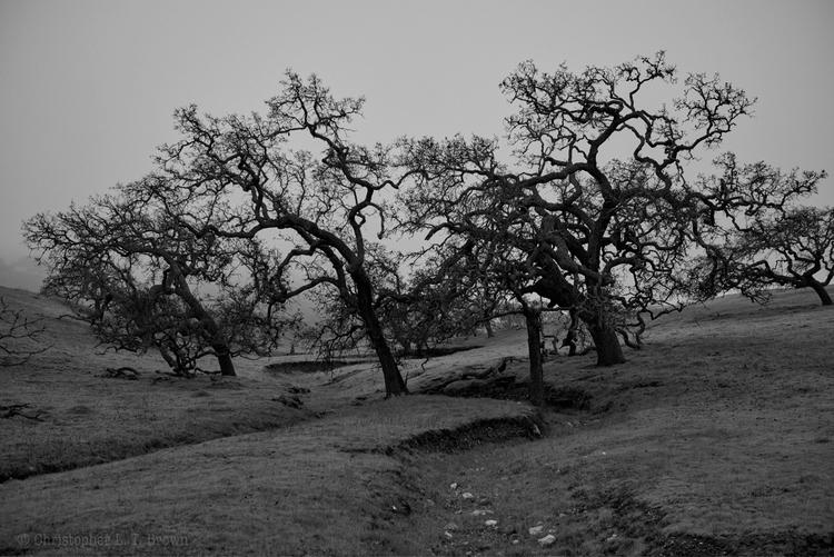 gathering oaks. Santa Ynez Vall - tychobrown | ello