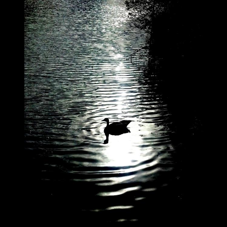 darkness falls canon - 2013 - tehranchik | ello