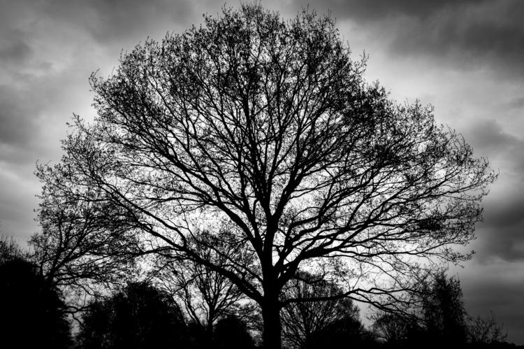 trees photo: Tree Silhouette - 5 - davidhawkinsweeks | ello
