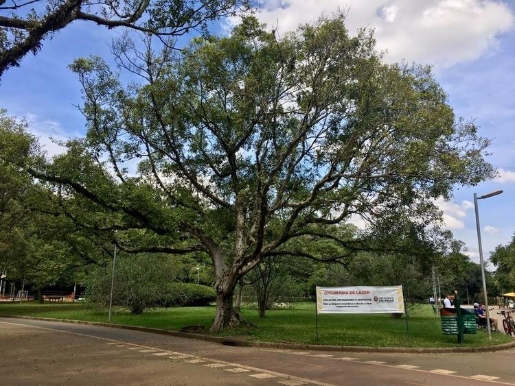Há mais de 15.000 árvores Parqu - antoniomg | ello