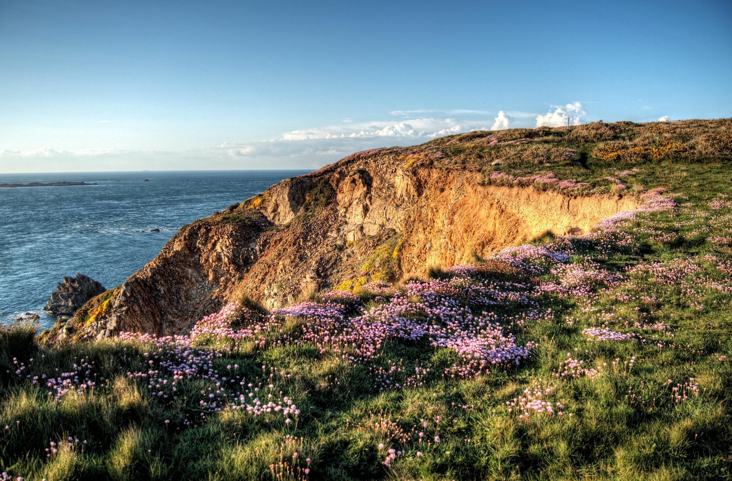 Cliff flowers - Wildflowers cli - neilhoward | ello