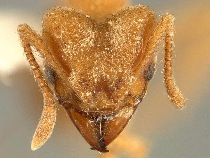 creepy crawly: ant species name - bonniegrrl | ello