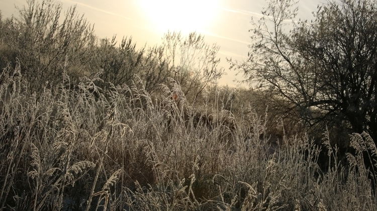 Unedited, Love - Frost, Winter, Nature - theeleventhletter | ello