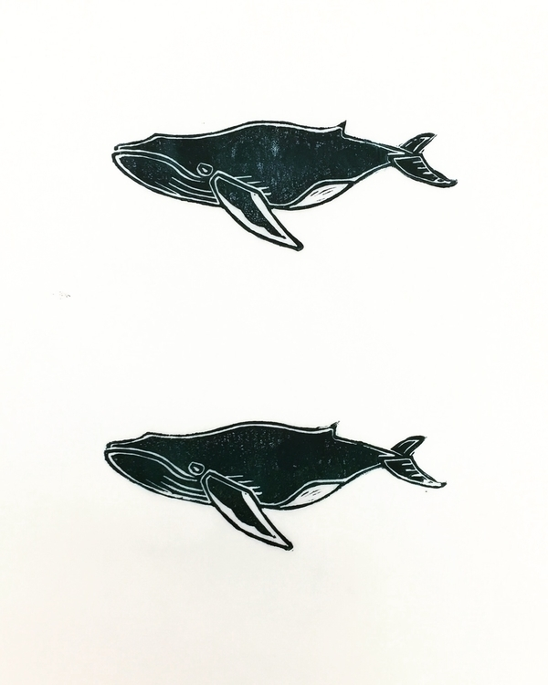 heard sound humpback whales, ne - igimidraws | ello