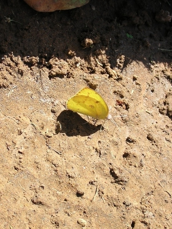 kelebek - willmoller | ello
