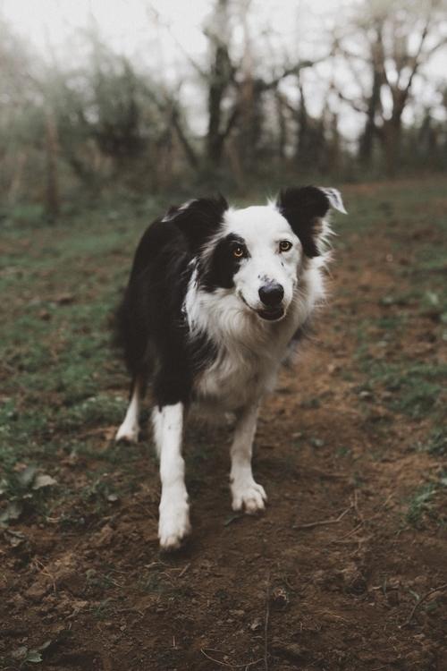 Doggo - samuelledwards | ello