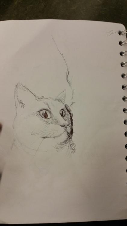practice, cat - lienvliegmachien | ello