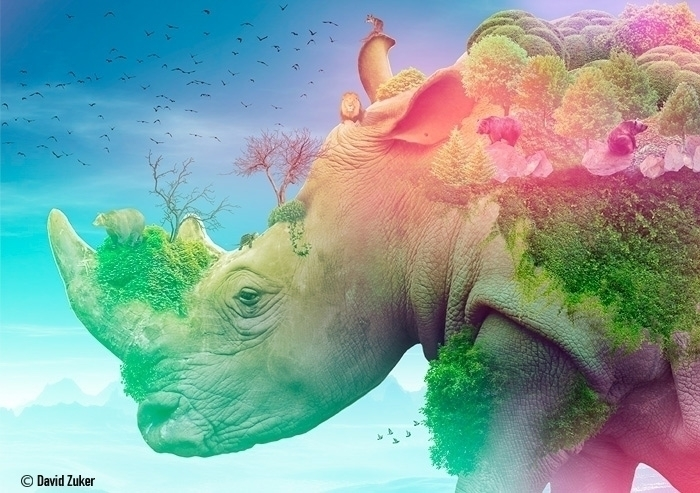 Rhino - photomanipulation, digitalart - davidzuker | ello