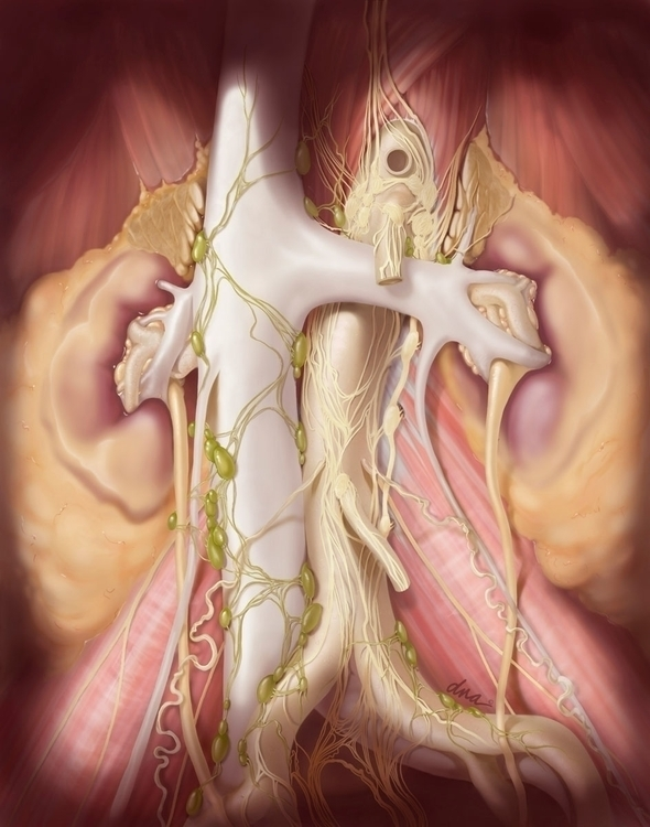 RPLND - medical, illustration - alexandrawbaker | ello