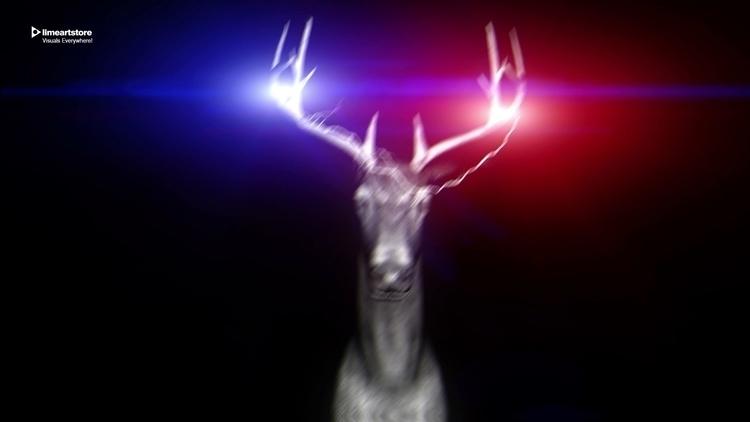 Deer Vj Loop - vjloops-8669   ello