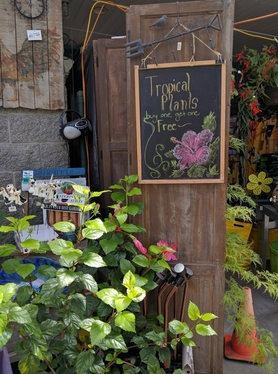 chalkboard, advertisement, flowers - satoita | ello