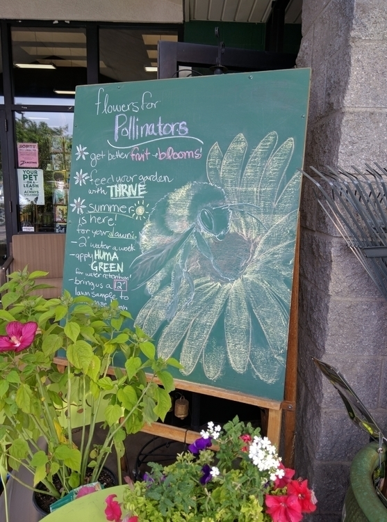 chalkboard, garden, zamzows, advertisement - satoita | ello