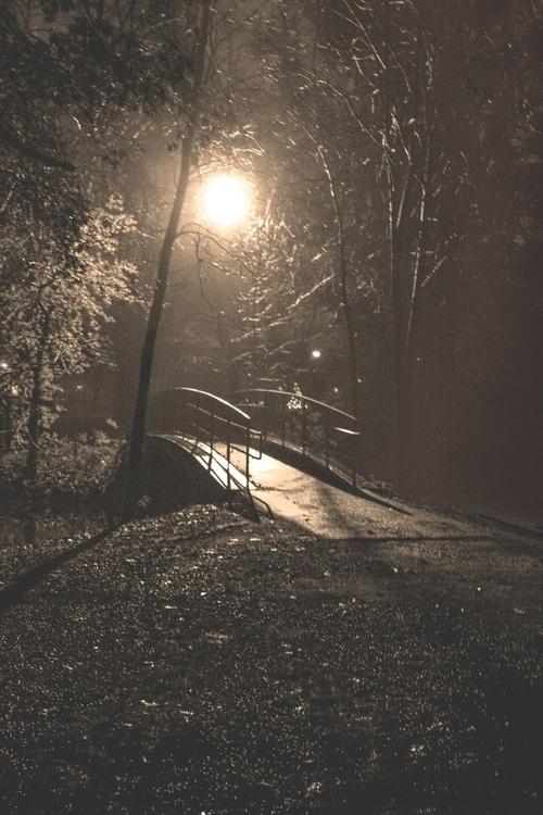 photography, bridge, forest, night - dave19 | ello