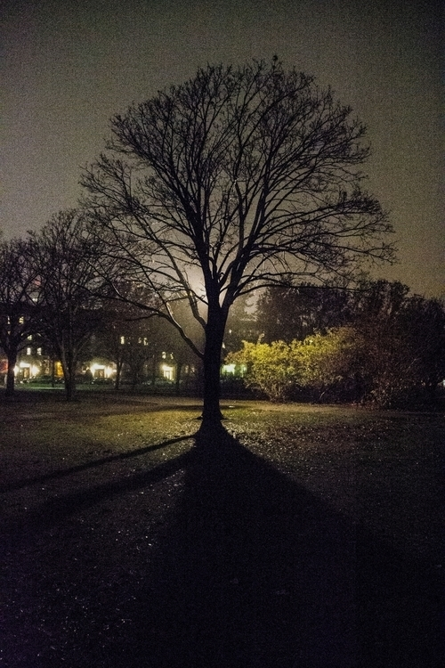 photography, tree, shadow, night - dave19 | ello