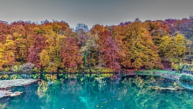 Season II - switzerland, forest - lichtundschatten | ello