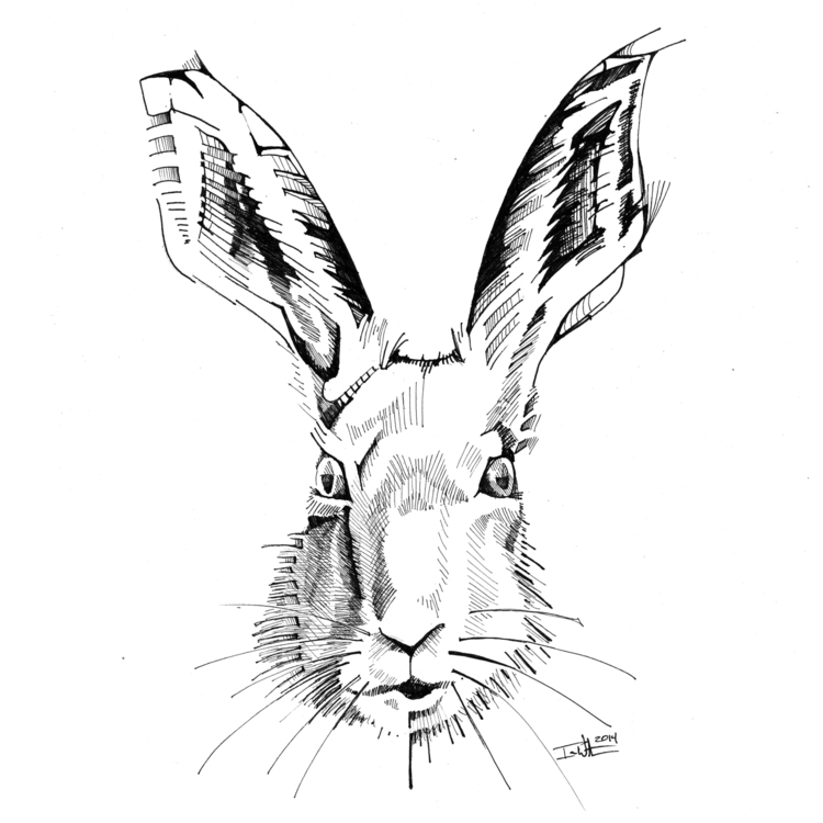 Rabbit - illustration, drawing - ianwithers | ello