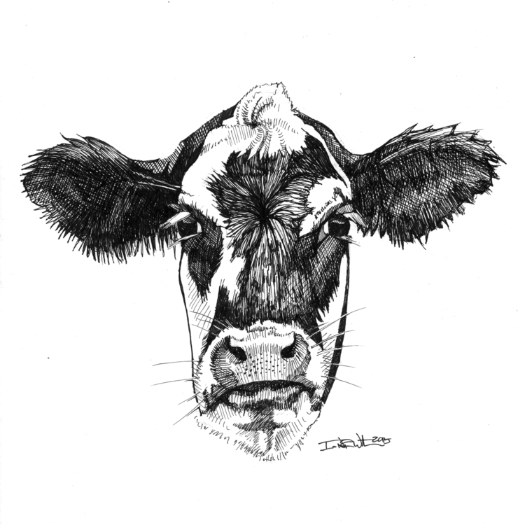 Black White Cow - illustration, design - ianwithers | ello