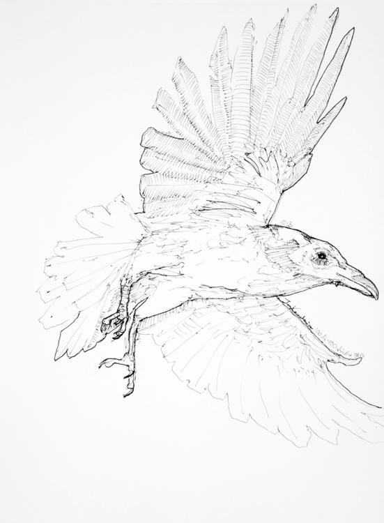 crow Ink paper, A3 - raven, bird - jandraws   ello