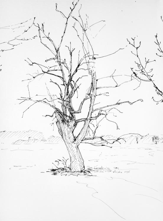 Tree Ink paper, A3 - tree, trunk - jandraws | ello