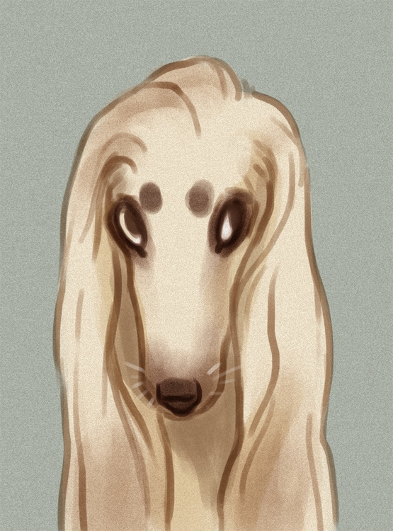 illustration, animals, dog, afghanhound - keit | ello