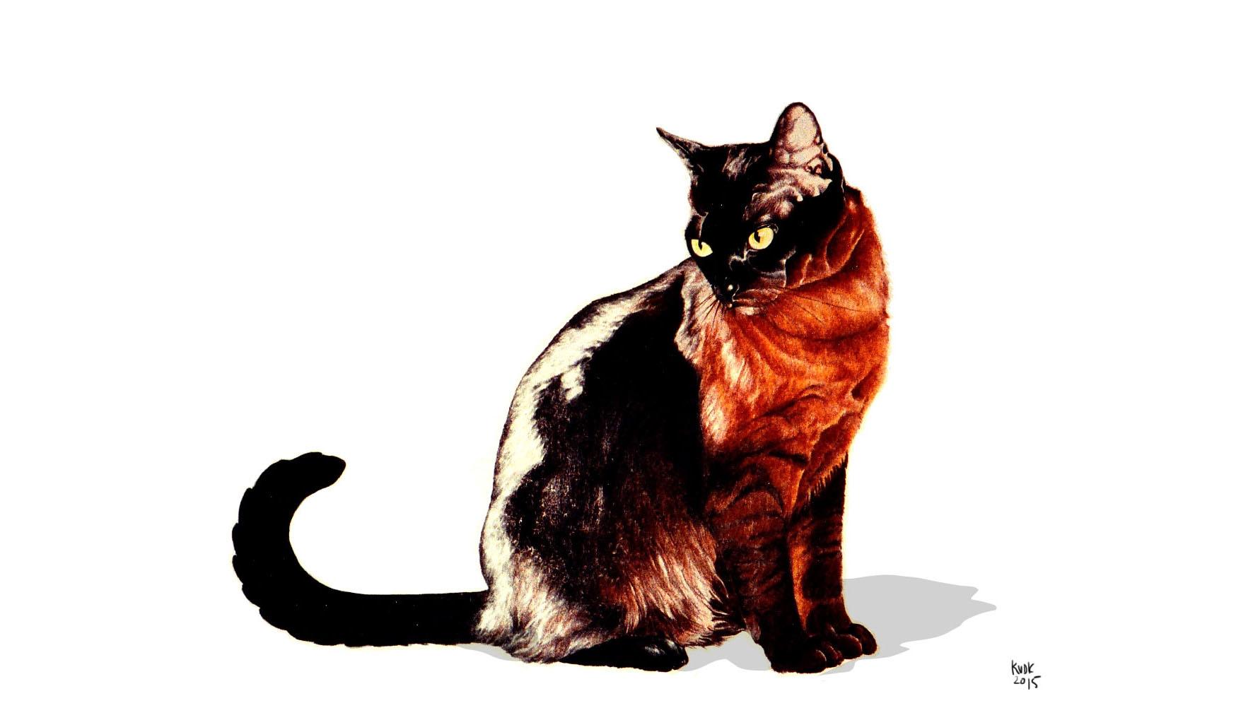 kitty cats - illustration, painting - kierston | ello