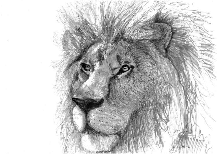 Lion Tria Markers, B2 - lion, cat - jandraws | ello