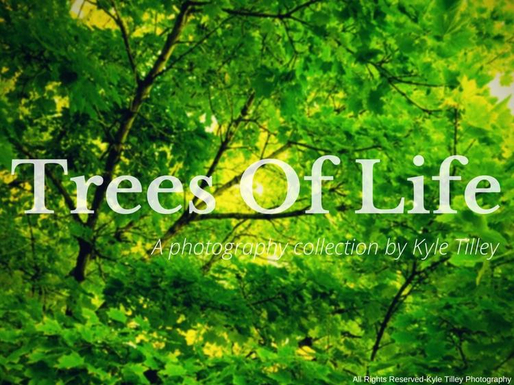 photography entitled Trees Life - kyletilleyphotos | ello